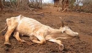 zimbabwe dead livestock